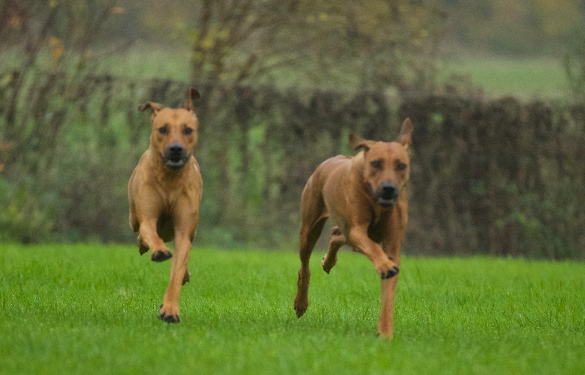Hund & Klikker